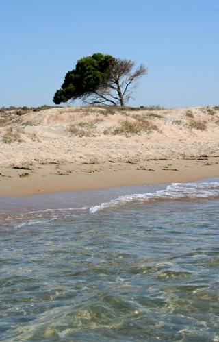 Playa de el pinet en santa pola